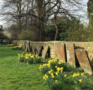 Daffodils-Bicester-e1489955862467