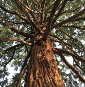 Tall-Tree-Bicester-e1489955478292
